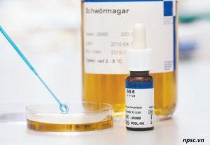 Kháng huyết thanh vi sinh vật SSI Salmonella H1+z6